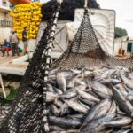 Fisheries Commission embarks on measures to subvert IUU fishing following threats of EU ban